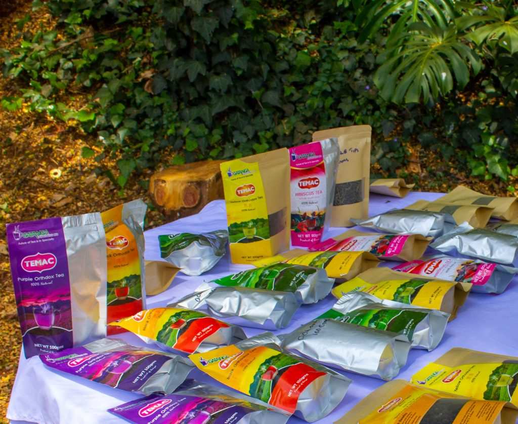 kenya's first purple tea farm